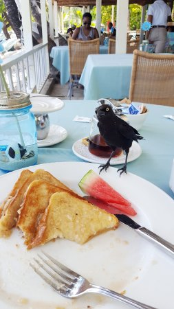 Adjacent to the Buccaneer Beach Club is a cute resturant. Coconut Grove. This little fellow was