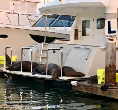 DANA POINT HARBOR, CA!  Oh no, 😴SEALS on the boat!