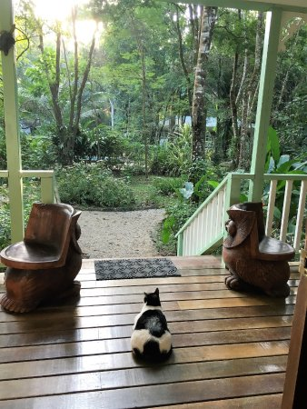 Punta Gorda, Belize: Our morning oasis