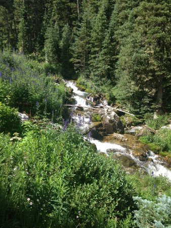 Taos County, NM: Waterfall along the trail to Williams Lake