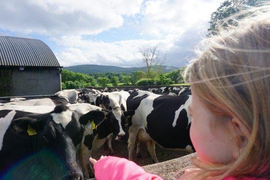 The Farm Cottages Mallow Irland Omd Men Tripadvisor