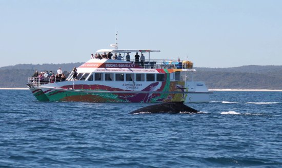 Urangan, Austrália: The MV Amaroo and humpback whale