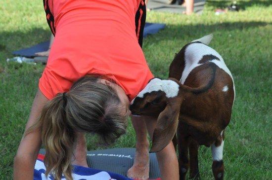 Gettysburg Goat Yoga