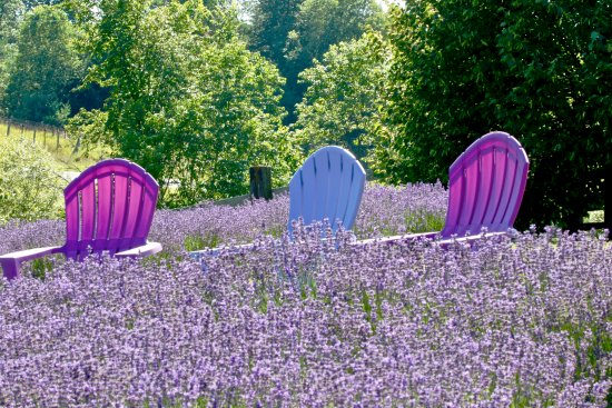 Boyne City, MI: Color coordinated chairs to enjoy the view