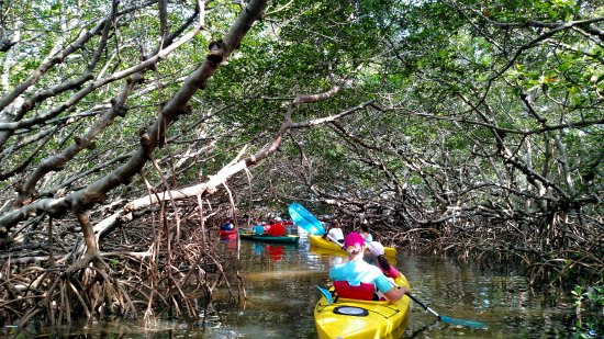 Tierra Verde, FL: Enjoy the shade of the mangrove tunnels.