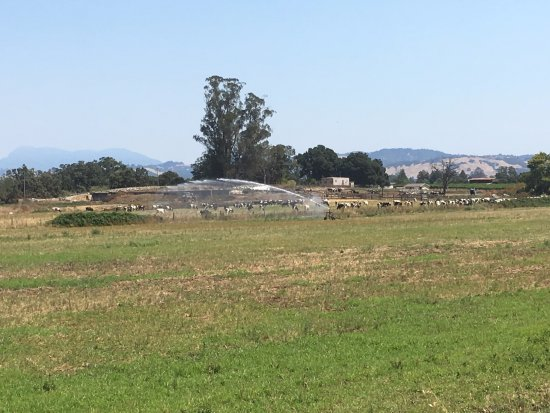 Ace It Bike Tours: Cows grazing on the grass.