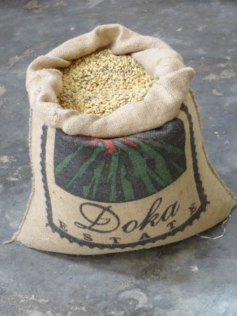 Doka Estate Coffee Tour: photo7.jpg