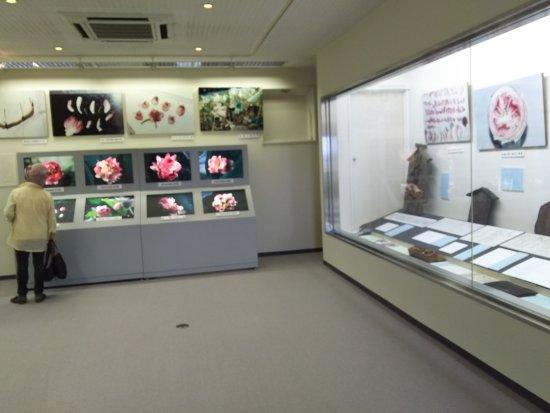 Moriyama, Japan: 近江妙蓮の資料室