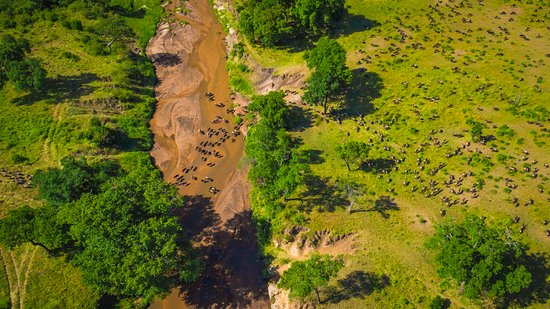 Sala's Camp: An aerial of the great migration