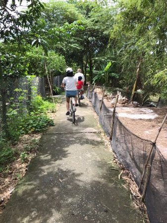 Travel Sense Asia: Our cycling around the homes, farms and town of Cai Lay was magnificent