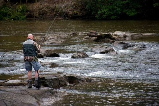‪‪Dillsboro‬, ‪North Carolina‬: The Best Western Plus River Escape is the perfect place to stay for Fly Fishing enthusiasts.‬