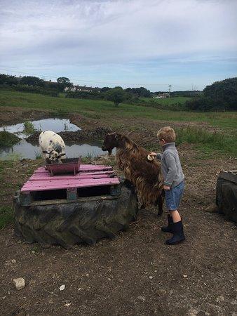 Marhamchurch, UK: Feeding the animals