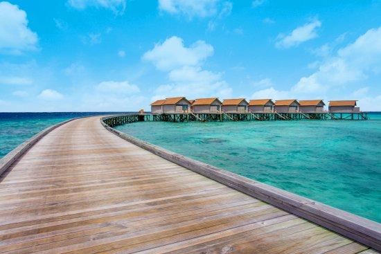 Pool - Picture of Centara Ras Fushi Resort & Spa Maldives, Male - Tripadvisor