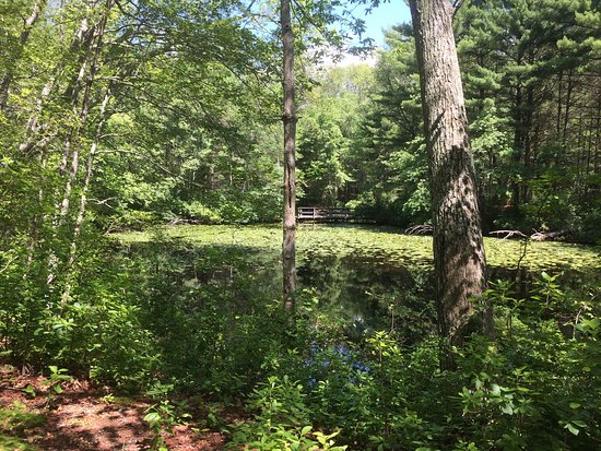 Griswold, CT: Some of the campsites are huge! Pretty pond.