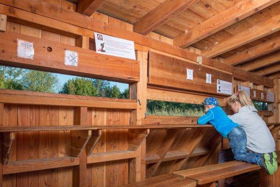 Cudrefin, Szwajcaria: Observation des oiseaux au centre-nature de la Sauge