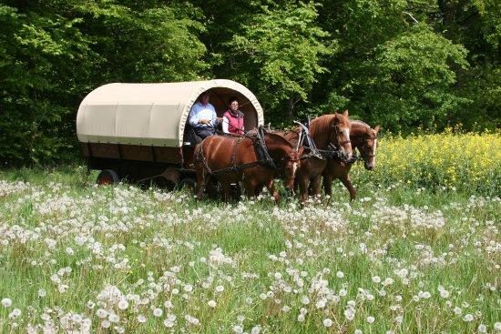 Gletterens, سويسرا: Promenade découverte de la Grande Cariçaie - Calèche, nature et saveurs