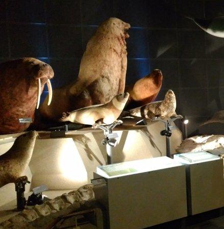 Kanagawa Prefectural Museum of Natural History: 神奈川県立生命の星・地球博物館