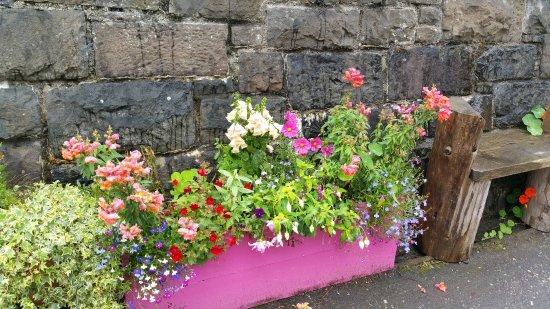 Tighnabruaich, UK: PRETTY FLOWERS