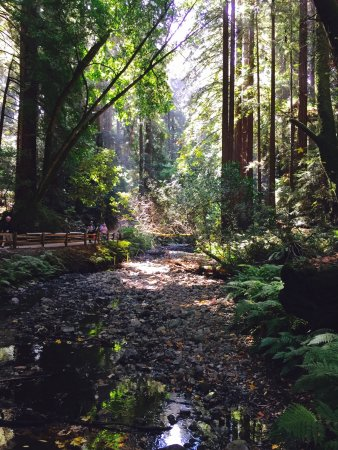 Muir Woods National Monument Mill Valley Ca Top Tips