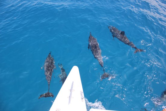 Image result for dolphins swimming with boat