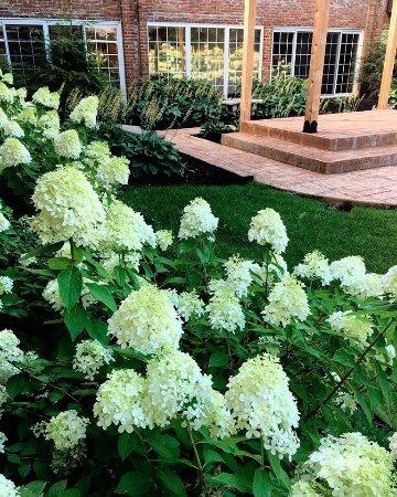 ذا كنسينجتون كورت: Full bloom! 