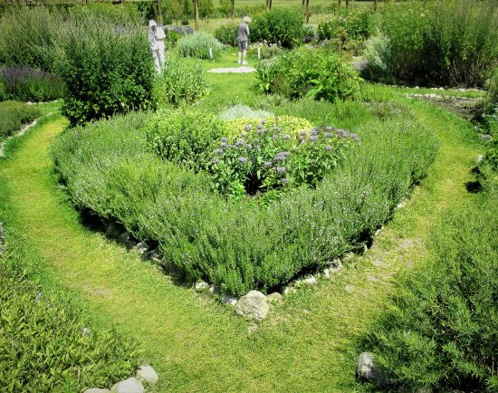 Herb Bed From The Interior Of The Lavender Labybrinth