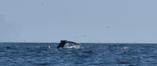Conception Bay South, Канада: whale tail
