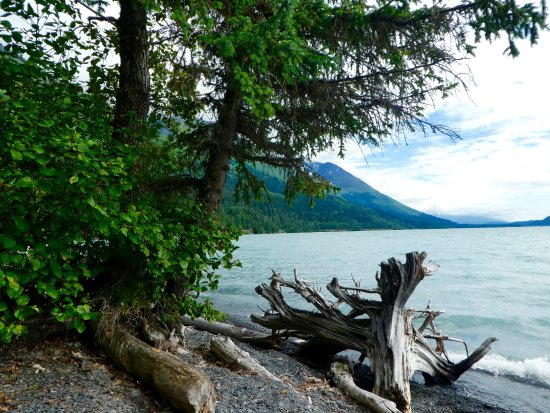 Moose Pass, AK: The beach where we enjoyed a nightly fire