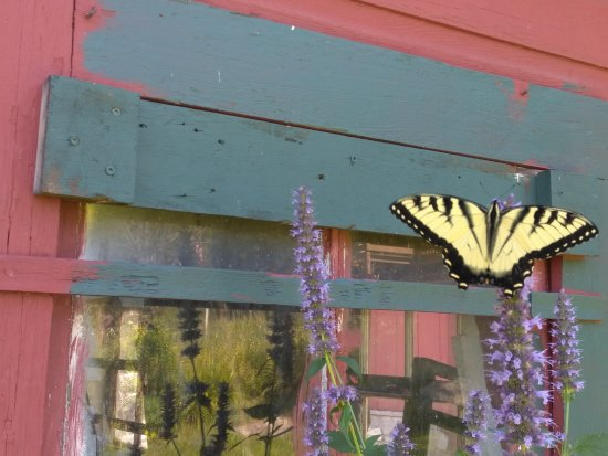 Preston, CT: We had fun trying to chase all the butterflies.