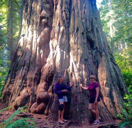 Lady Bird Johnson Grove: Redwood tree