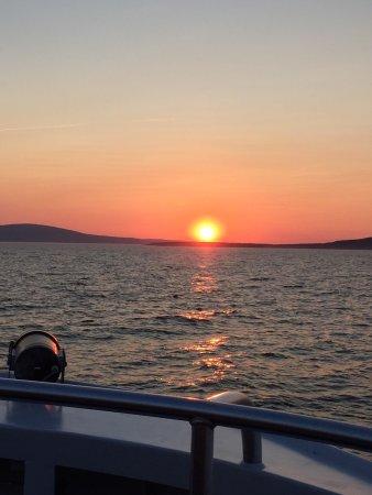 Bar Harbor Whale Watch Company : photo0.jpg