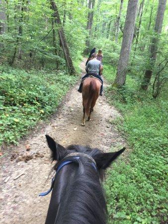 Smokemont Riding Stables: photo0.jpg