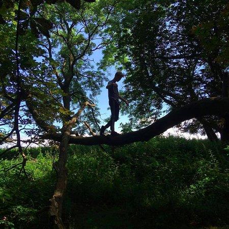 Tranekaer Slot: For de unge eventyrlystne er der massevis af træer der egner sig til klatring...