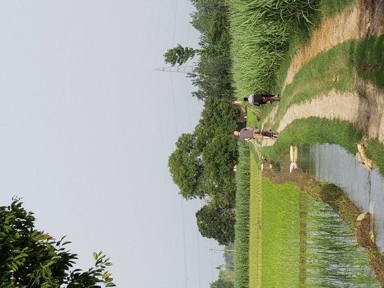 Gurdaspur District, India: 20170706_080838_large.jpg