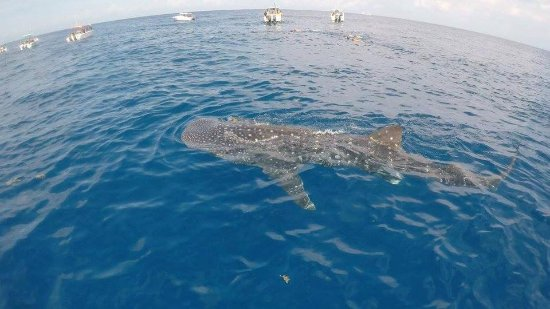 Captain Tony Garcia's Guadalupana Tour Boat: View from in the boat