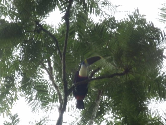 Siona Lodge: Finding the tucan!