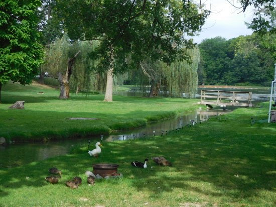 Staunton / Walnut Hills KOA: Ducks by the creek