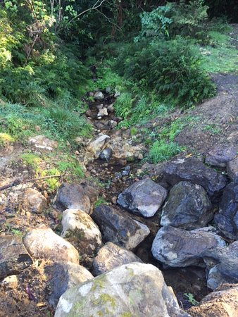 Papamoa, New Zealand: small stream from footpath on way up