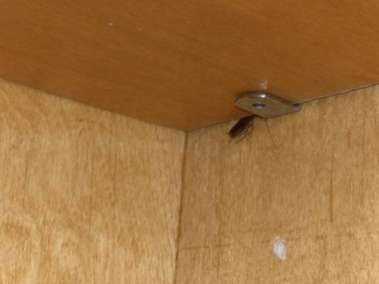 Padre South Hotel: Roach in kitchenette cabinets!