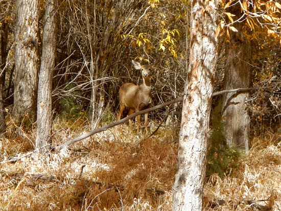 South Fork, CO: photo2.jpg