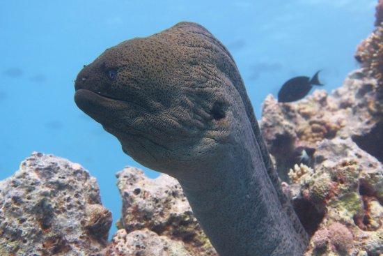 Scuba Planet Dive Club