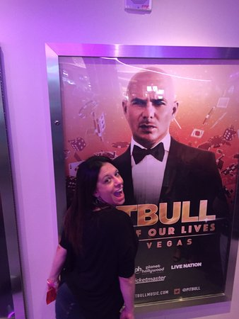 My Wife And Pitbull Picture Of The Palazzo At The Venetian Las