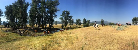 Greenough, MT: Cattle Drive