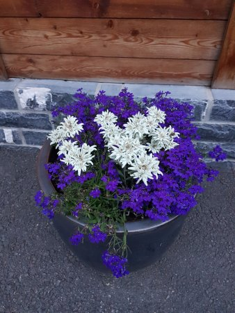Edelweiss Restaurant: Flores na entrada- Edelweiss é o nome desta flor branca