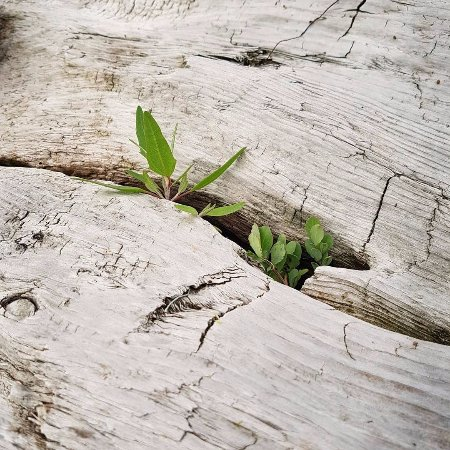 Halfmoon Bay, Canadá: Beautiful details hidden in the driftwood