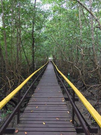 Hotel Transamerica Ilha de Comandatuba: Passeio ecológico no manguezal!