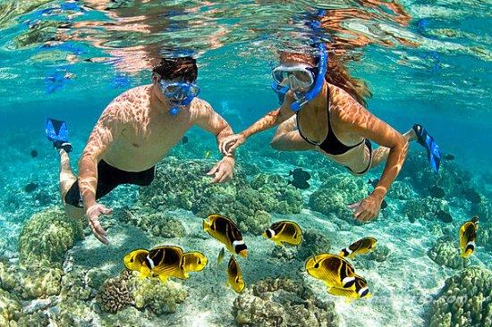 Lặn biển ngắm san hô tại Cù Lao Chàm . Hãy đến với đà nẵng để được ...