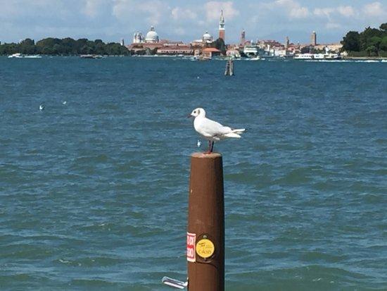 Oasis Lagoon u0026 Residence & Oasis Lagoon u0026 Residence - Prices u0026 Condominium Reviews (Venice ...
