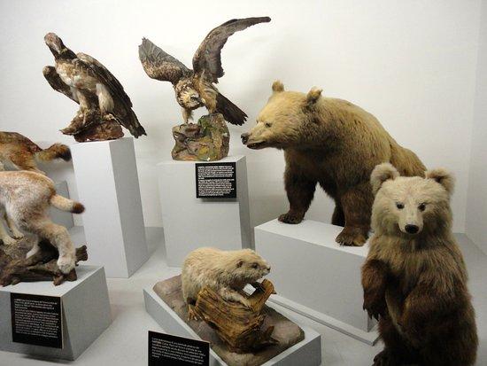 Museo Cantonale di Storia Naturale