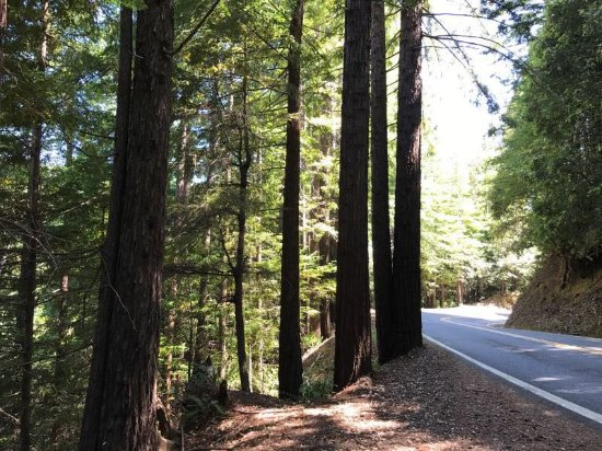 Garberville, CA: Richardson Grove State Park 15